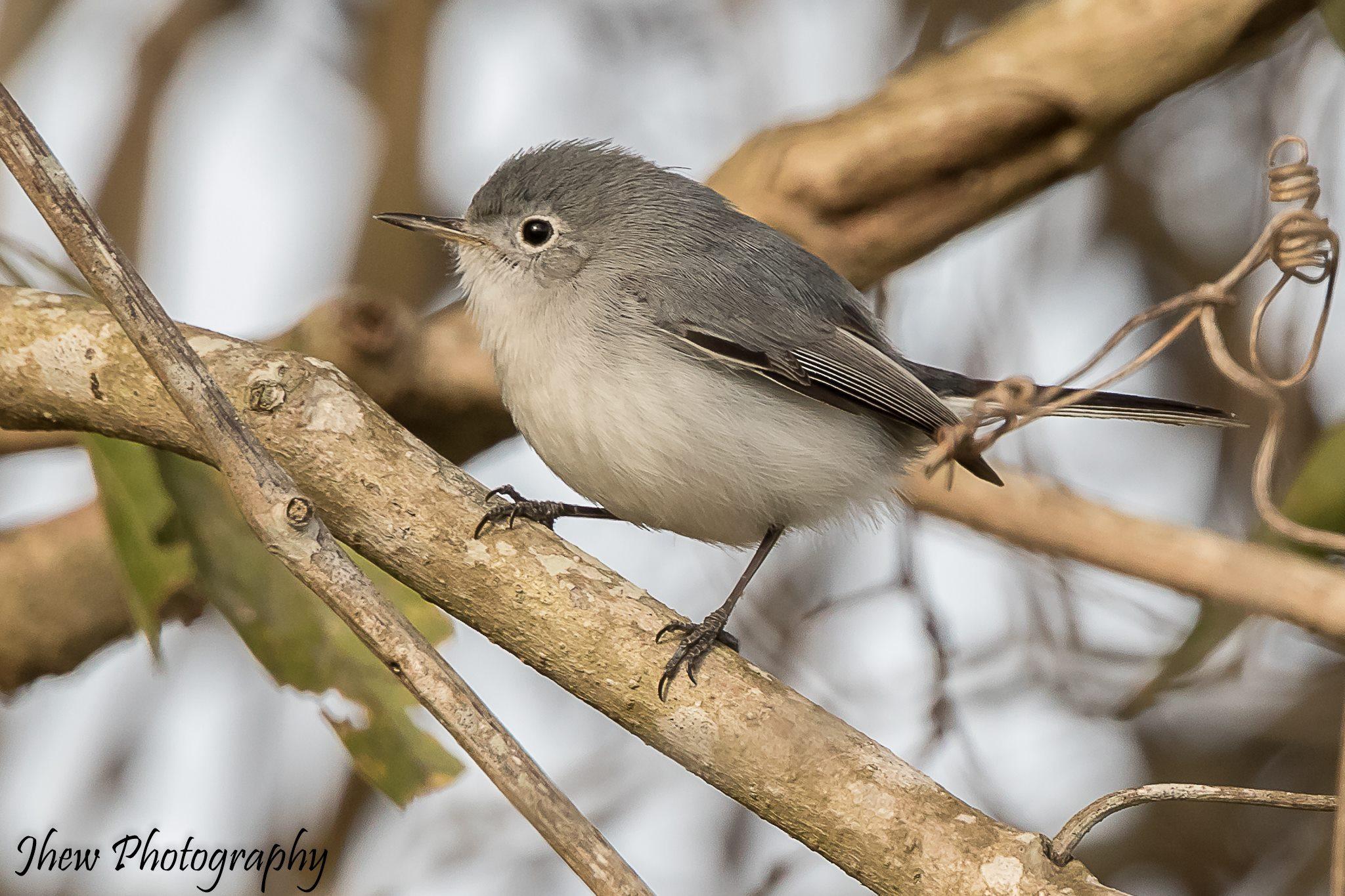 Perching Birds Lake Apopka Wildlife